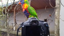 Un joli petit Perroquet s'est posé sur mon Appareil Photo Canon