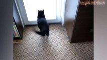 Funny Cats And Rats - Cats Vs Rats - Rats Attacking Cats Compilatio