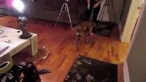 70.SARAN WRAP DOG PRANK_clip20
