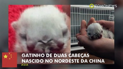 Gatinho de duas cabeças nascido no nordeste da China