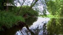 wildlife documentary American Eagle HD Nature documentaries animal planet HD
