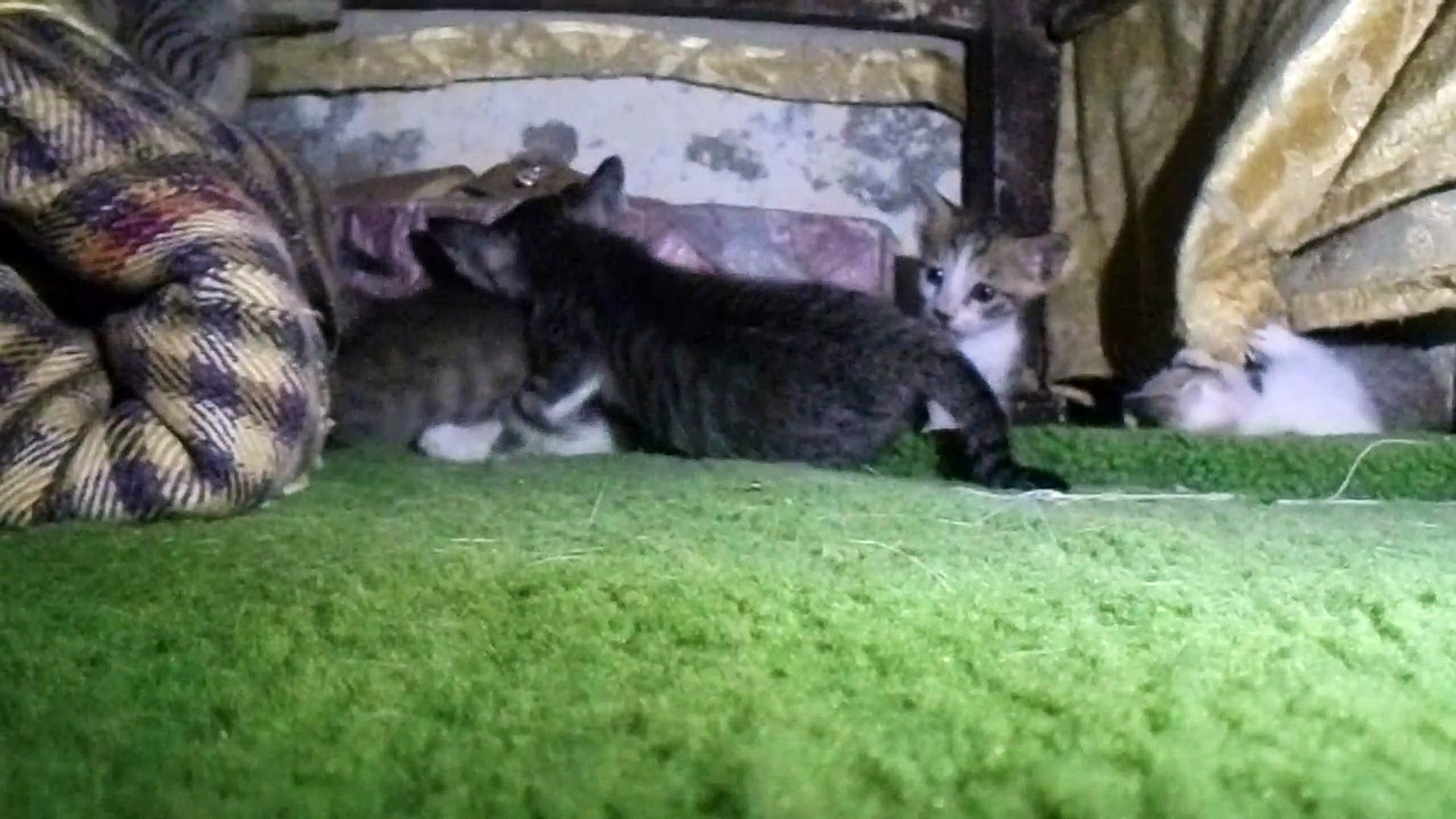 Cute Funny Small Cats Video