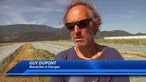 Hautes-Alpes : les agriculteurs fortement impactés par l'orage de grêle à Chorges