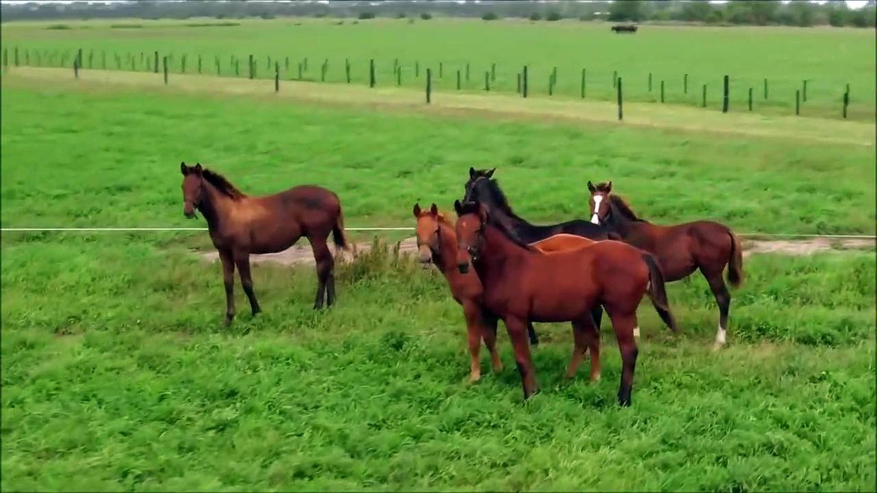 Horses for Kids – Drone Horses Video – Farm Animals Fun