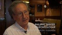 Les Métiers du Muséum : le Paléontologue