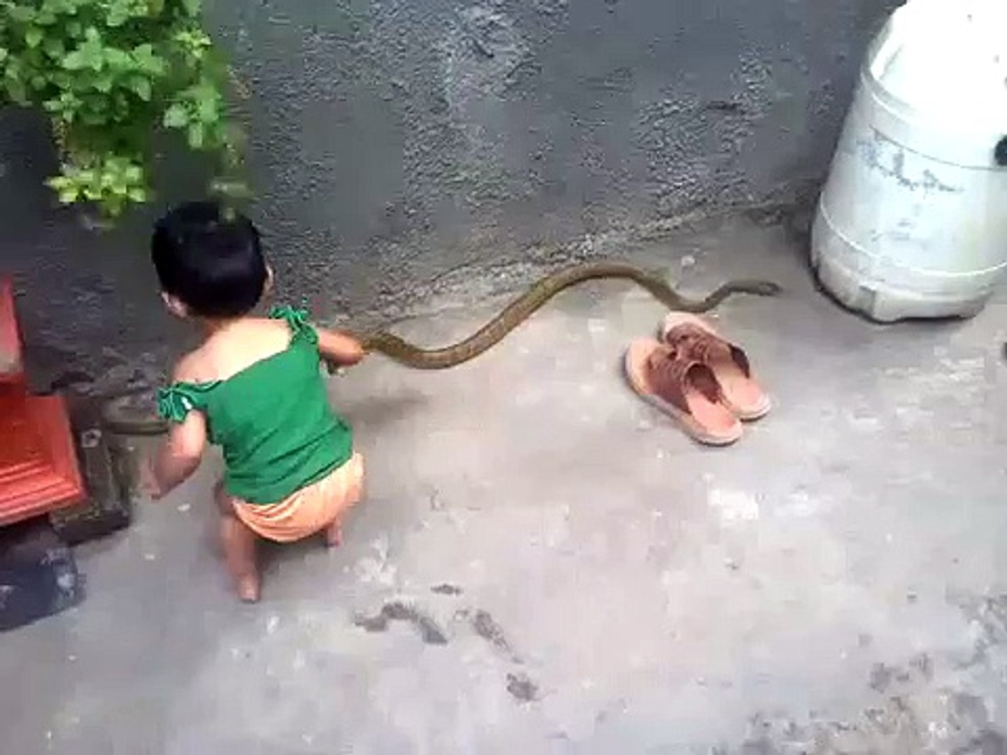 young kid play with snake