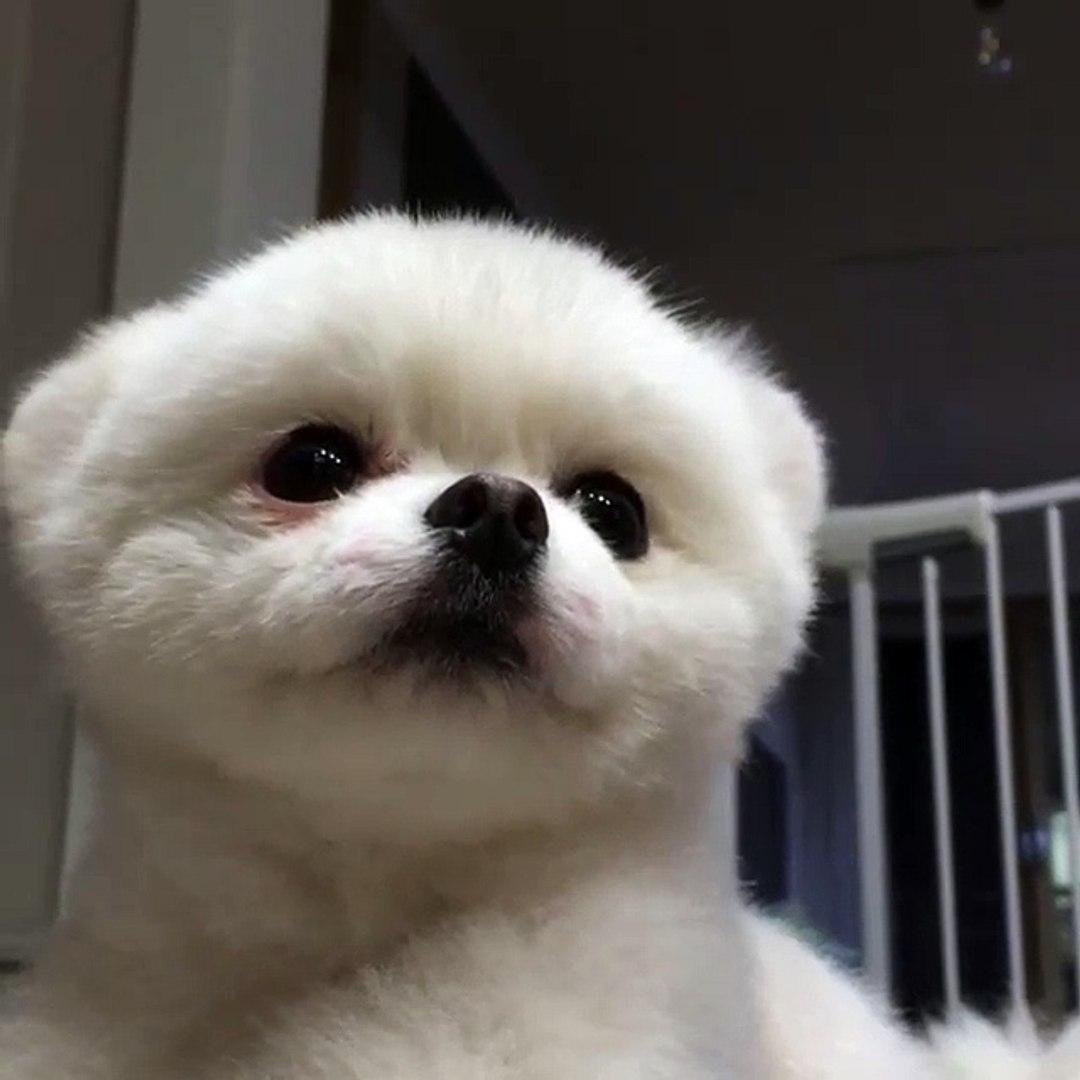 cute poppy videos - videos dog