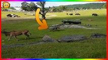 Cet éléphanteau poursuit tout ce qui bouge dans ce zoo et c'est trop mignon !