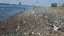 Cette plage est surnommée Butterfly beach, la plage aux papillons et vous allez comprendre pourquoi