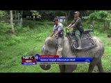 Seekor Gajah Ditemukan Mati di Langkat Sumut - NET10