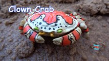 Animaux boîte de pour trou trou dans enfants apprentissage des noms le sable le le le le la larmoiement sauvage safari