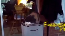 FUNNY Cats Gone Crazy! A FUNNY Animals Compilation of FUNNY Kitty Cats, FUNNY Pets, Funniest Animal