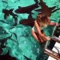 Nager avec les requins : expérience incroyable