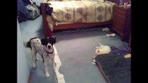 Funny Guilty Cat Guilty Ca