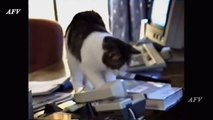 Funny, Clever Cats, BeDog Tricks, Cat & Dogs, Pet Animals Agility