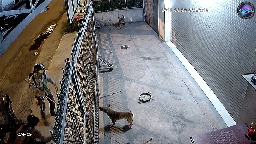 Sick Thieves Killing Dogs For MEAT In Vietnam