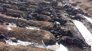 Pakistan fuel tanker truck Ex-plosion -- Bahawalpur Oil tanker Acci-dent - LOok at the Bo-dies !