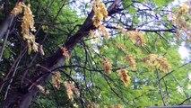 Лето  как Осень   Как Лето  Осень  Обмануло   Лето  с  привкусом  осени