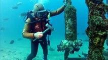 """Insolite : une """"amitié"""" entre un plongeur et un poisson"""