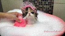 Yıkanan Tatlı Kedi   Bebek Kedi Banyo Keyfi Yapıyor ,Çizgi film izle animasyon 2017