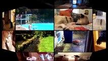 3Cats And Rats - Cats Vs Rats - Rats Attacking Cats Compilation