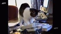 , Best Pets Compilation, Dog Tricks, Cat & Dogs, Pet Animals Agility
