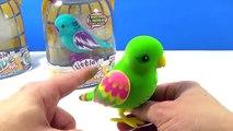 Et des oiseaux petit vivre animaux domestiques examen en chantant Parlant Romeo juliette | tweet