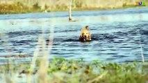 Canal Comparaison chien allemand dans berger le le le le la ultime contre Labrador hindi  