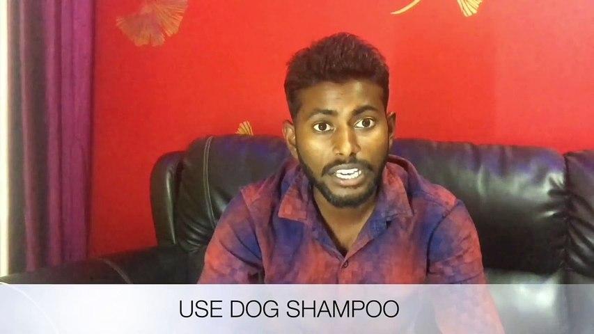 How to solve Dog Hair F Hindi 2017