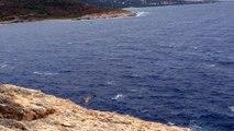 L'Île-Rousse : premier envol d'un jeune goéland à la Pietra
