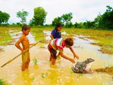 Amazing children digging crazy frog - How to catch frog in a hole in Cambodia