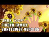★2 HOURS★Finger Family || Sunflower Version || Plus Lots More Rhymes || 3D Animation Rhymes