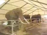 Probléme de comportement , éléphants cirque