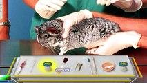 Vétérinaire urgence ordinateur personnel Jeu tous les complet mouvement vidéos