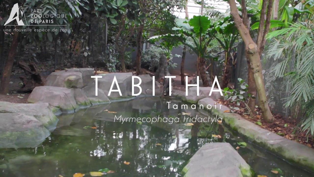 Tabitha,Tamanoir