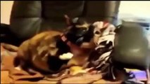 Funny Cats Compilation Most See Funny Cat Videos Ever