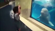 Funny Dolphins Compilation _ Dolphins are one of the smartest animals