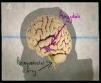 Miedo y cerebro: Adrenalina y endorfinas (Emociones extremas)