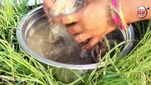 Crabs Pakora Spinach Fry Crispy Masala   Crabs Pakoras Recipe   Crab Claws Fried snack pakoda
