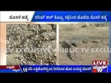 Raichur: Crocodiles, Fishes & Frogs Die In Krishna Rivers Due To Dry River