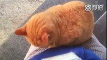 橘猫这么主动,你还能淡定吗?