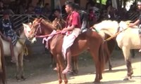 Parade 1001 Kuda Sandalwood & Tenun Ikat, Daya Tarik Sumba