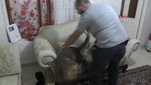 Adana'da Uyuşturucu Operasyonu: 2 Kardeş Tutuklandı