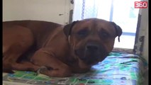 E pabesueshme, qeni nuk pushon se qari pasi kupton qe eshte braktisur nga pronaret e tij (360video)