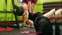 Tente Não Rir #38 (Impossivel) Se Rir Perde - Videos Engraçados Brasil - YouTube