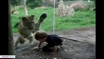 Animaux droles zoo pour enfants et tout petit