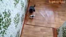 Funny Cats And Rats - Cats Vs Rats  Rats Attacking Cats Compila