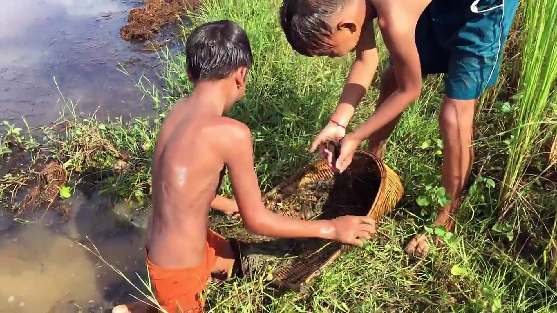 So Amazing Children Catch Turtle Using Traditional Tools Chhneang, How To Catch Turtle In