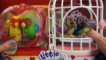 Et des oiseaux petit vivre amour mon animaux domestiques ♥♥ romeo juliet