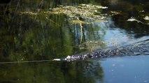 Crazy Frog Fishing Blow Ups!   Teckel Sprinker Frog